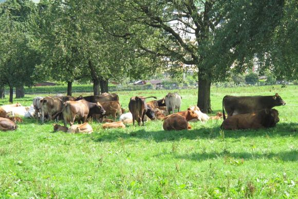 เนื้อวัวสด