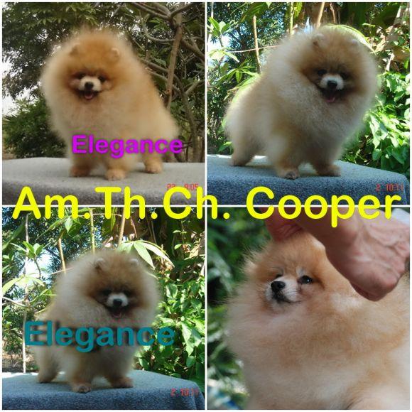 AM TH.CH. Tokie' Dome doi take no prisoner < Cooper >