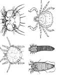 Insecticide Organic Spray สเปรย์กำจัดแมลงทุกชนิด, สัตว์เลือดเย็น, แมลงศัตรูพืช