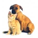 ของหมด ผลิตภัณฑ์ปลูกขนใหม่ & ป้องกันเห็บ สำหรับหมาแมว สูตรพร้อมใช้