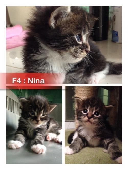 F4.   ตัวเมีย : น้องนีน่า  (Nina)
