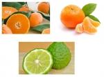 หัวเชื้อ Sanilair สเปรย์ปรับอากาศ กลิ่น Orange, Mandarin
