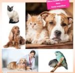 ผลิตภัณฑ์ปลูกขนใหม่ & ป้องกันเห็บ & หมัด สำหรับหมาแมว หัวเชื้อ/เจล