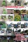 ประมวลภาพการจัดส่งต้นไม้ทั่วประเทศ