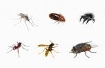 Insecticide Organic น้ำยากำจัดแมลงทุกชนิด, สัตว์เลือดเย็น, แมลงศัตรูพืช