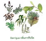 Air Sanitizer Garrigue essential oils 100% 1 Litre