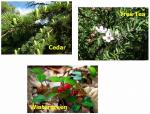 Anti-Acariens Elimination of mites without pesticides 1 Litre