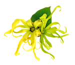 Ylang Ylang from Madagascar, Pure Essential oils 30ml